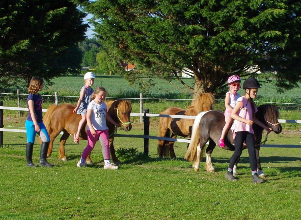 pony's op de camping